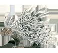 Porcupine image